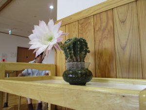 1年に一日だけ… サボテンの花
